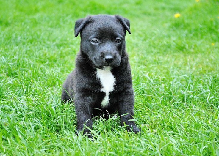 Educar a un cachorro: 10 claves para que haga las necesidades en su sitio