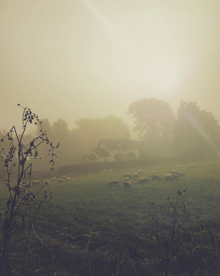 https://flic.kr/p/ySBbKn | Morning run views.. #eccleshall #VSCOcam #morning #sheep #picoftheday #dawn #rural #running #gorgeous