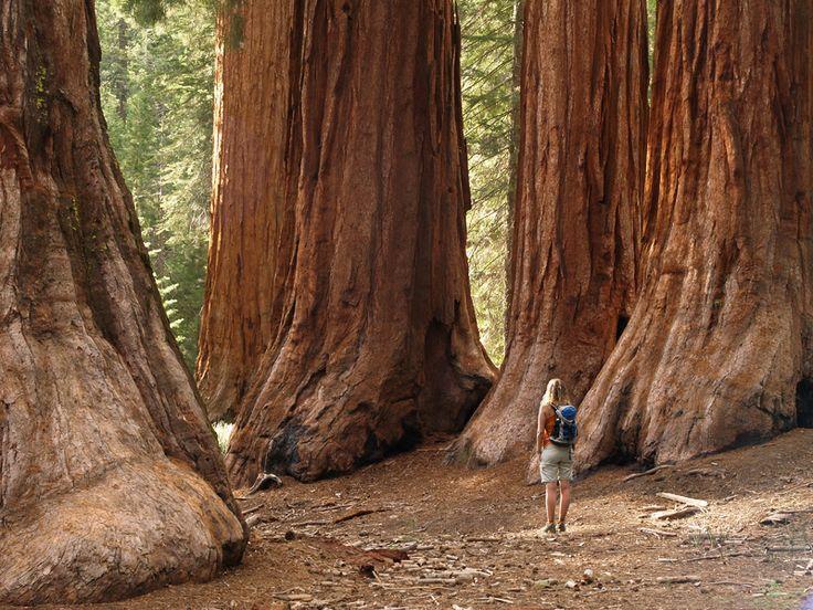La Foresta di Redwood è un parco nazionale degli Stati Uniti, situato