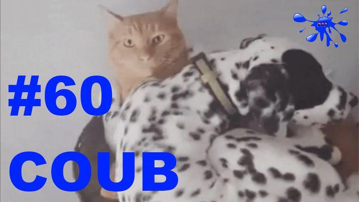 Лучшие приколы Best Coub Выпуск 60