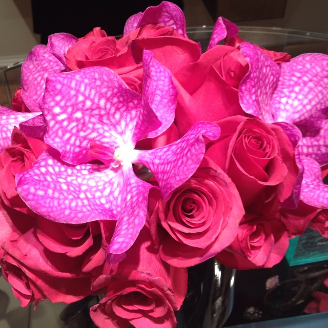 Love the fuchsia!: Rose, Flowers Power, Pretty Flowers