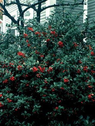 Evergreen Ent Garden City