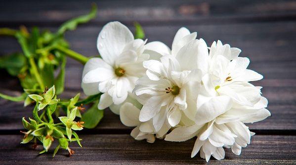 Quelle est votre fleur de naissance ?