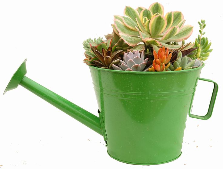 Watering Can Planter 10 Quot Green Canning Decorating