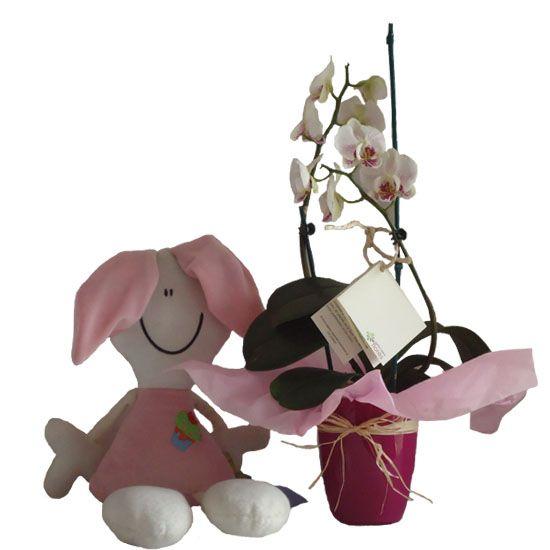LOVELY ORCHID, Correo de las flores
