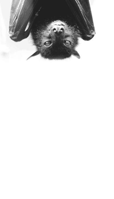 Bat. ☚
