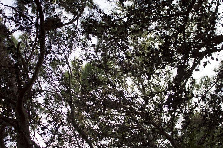 Under the pine, Rhodes, Greece