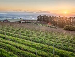 Sunset from Uva Mira Mountain Vineyards.