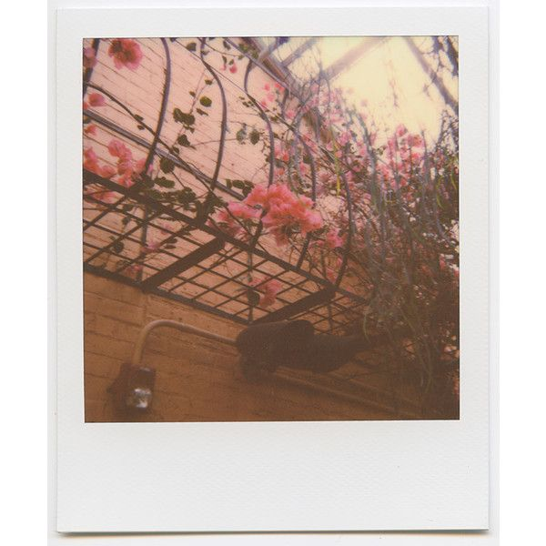 Photo Diary Summer Color Theory featuring Impossible Project ❤ liked on Polyvore featuring backgrounds, filler and pictures