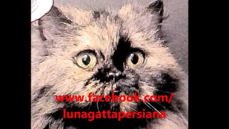 Il mio nome è  LUNA Storia vera di una gatta persiana + Bonus in regalo ...