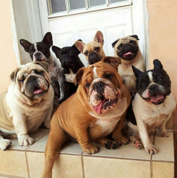 "My favorite rap group, ""Six Bulldogs and a Pug"", has a gig here next weekend.  Can't wait for them to drop their new single, ""I've Got a Bone to Pick With You"".  ~~  Houston Foodlovers"