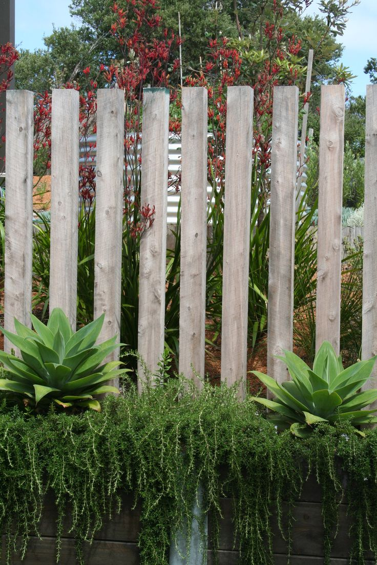 Coastal garden. Swan neck agave with prostrate rosemary and vertical timber post screen. Sorrento House. www.marktraversla.com