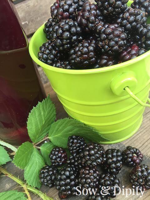 DIY  Red Wine Blackberry Vinegar - Tutorial
