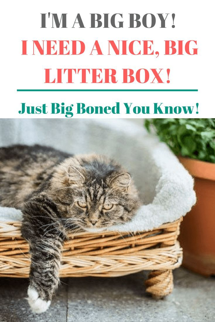 Need To Know The Best Litter Box For Large Cats Litter Box Best Litter Box Cats