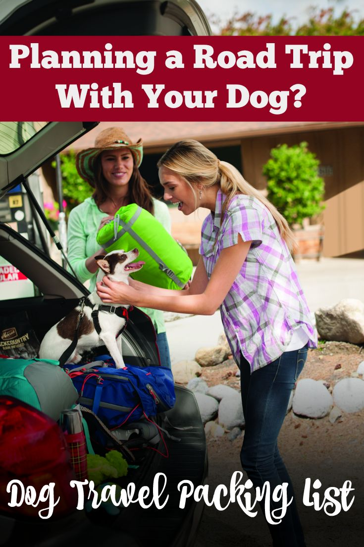 Planning a road trip with your dog? Pin this list of dog travel tips and dog-friendly packing list for camping trips & road trips. All the gear you need to bring to make sure your pet has a happy and healthy adventure.