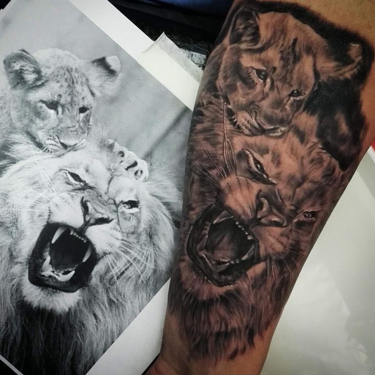 LION ,FAMILY
