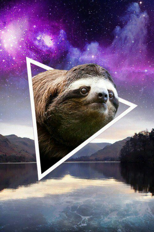 Sloth phone background. Funny finds Pinterest