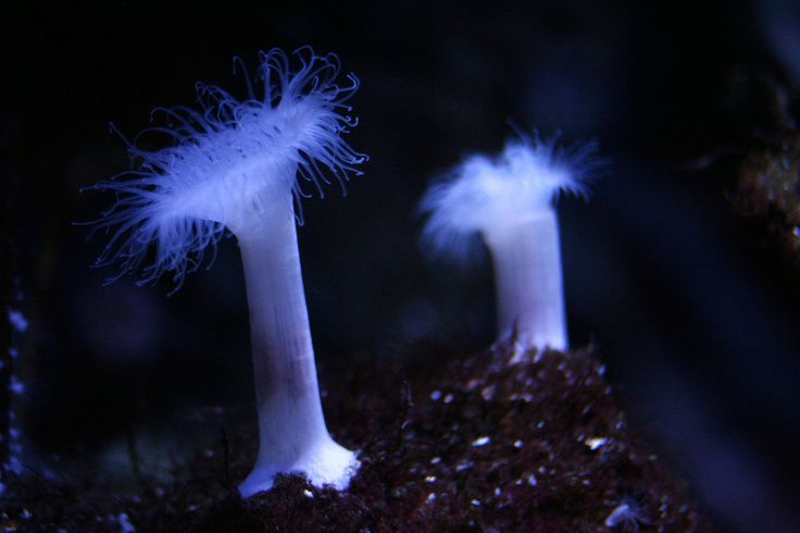 https://flic.kr/p/4gXN27 | Porifera | Taken in Sea Life Helsinki. December 29, 2007.