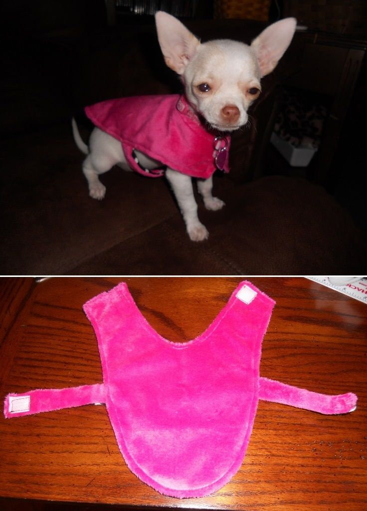 Top 10 Cute DIY Pet Clothes- My chihuahua is bald, so he will love these. He has…
