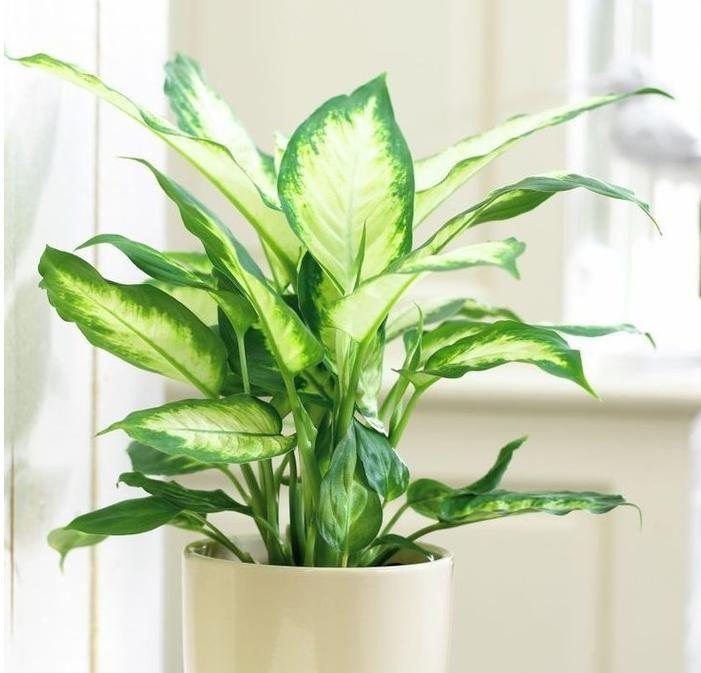 Красивые домашние растения, которые прекрасно растут при низкой освещенности  http://papinbag.ru/blog/%d0%ba%d1%80%d0%b0%d1%81%d0%b8%d0%b2%d1%8b%d0%b5-%d0%b4%d0%be%d0%bc%d0%b0%d1%88%d0%bd%d0%b8%d0%b5-%d1%80%d0%b0%d1%81%d1%82%d0%b5%d0%bd%d0%b8%d1%8f-%d0%ba%d0%be%d1%82%d0%be%d1%80%d1%8b%d0%b5-%d0%bf/ Для комнат и помещений, выходящих на теневую сторону, эти сор