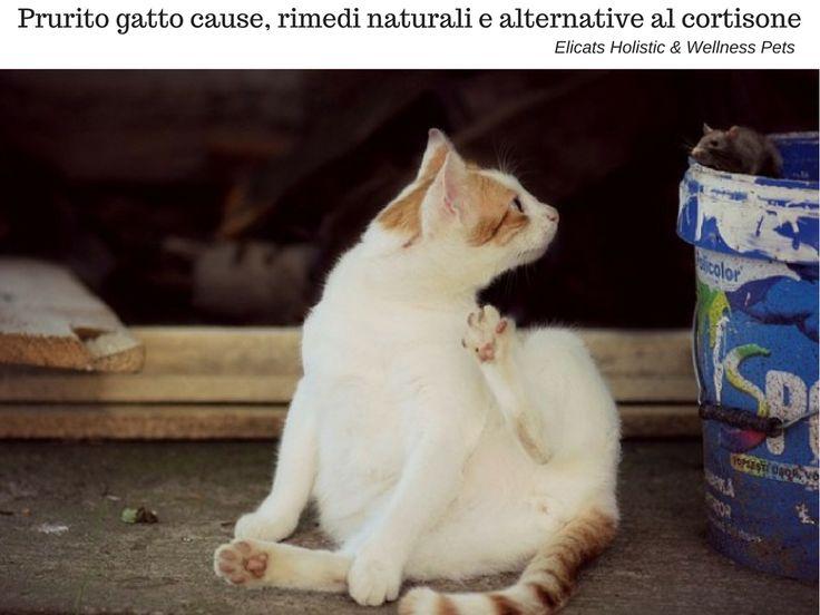 Prurito gatto rimedi naturali VS farmaci | Elicats Holistic Pets