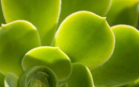 Hieronder worden 10 planten behandeld die de lucht zuiveren in je huis. De selectie is gebaseerd op hoe makkelijk ze groeien en te onderhouden zijn, hoe goed ze tegen pesticiden kunnen en hun efficiëntie in het opruimen van chemische dampen en transpiratiegraad. Areca Palm Staat ook bekend onder de naam goud palm of vlinderpalm. De […]