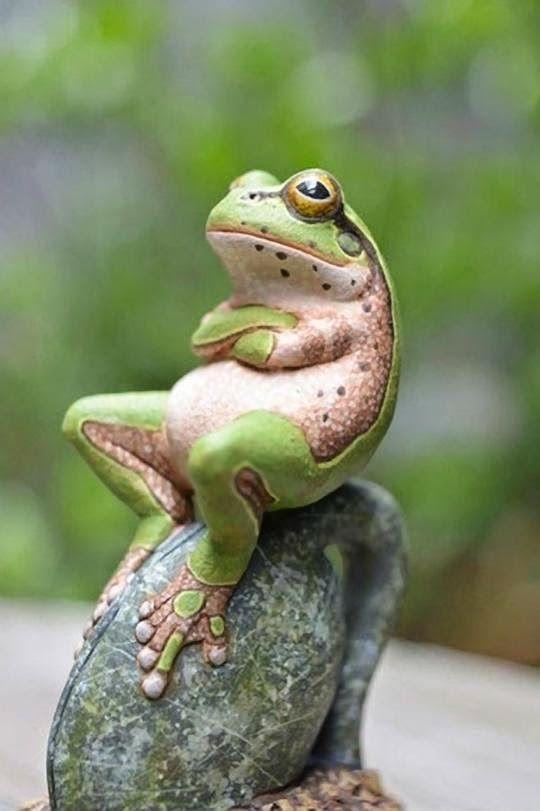 Imagenes de sapos y ranas: Simpatica imagen de rana [27-9-15]