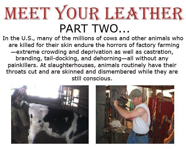 Meet Your Leather, Part Two: Hind Legs, Handbags Ladies, Animal Cruelty, Death, Foul By Products, Animal Abuse, Factories Farms, Beef By Products, Fur Farms
