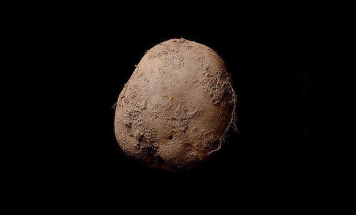 Современное искусство фотографирования картошки | artlab.club