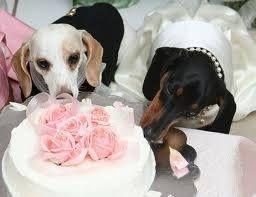 tresjoliewedding@gmail.com Anche i vostri amici del cuore impazziranno per le feste di Tres Jolie...
