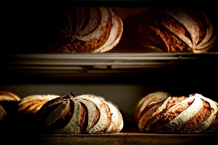 Brödpassion: Ett grovt bröd med lingon bakat med kärlek...