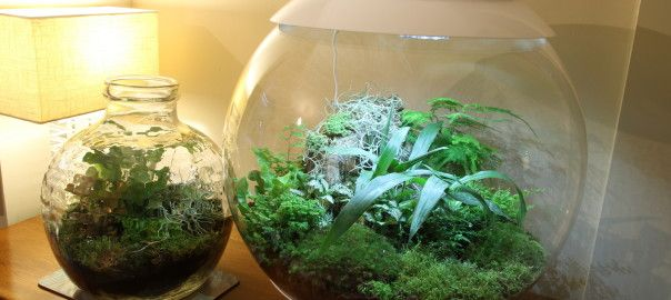 A BiOrbAir and traditional glass terrarium planted with ferns, terrarium plants and mosses.