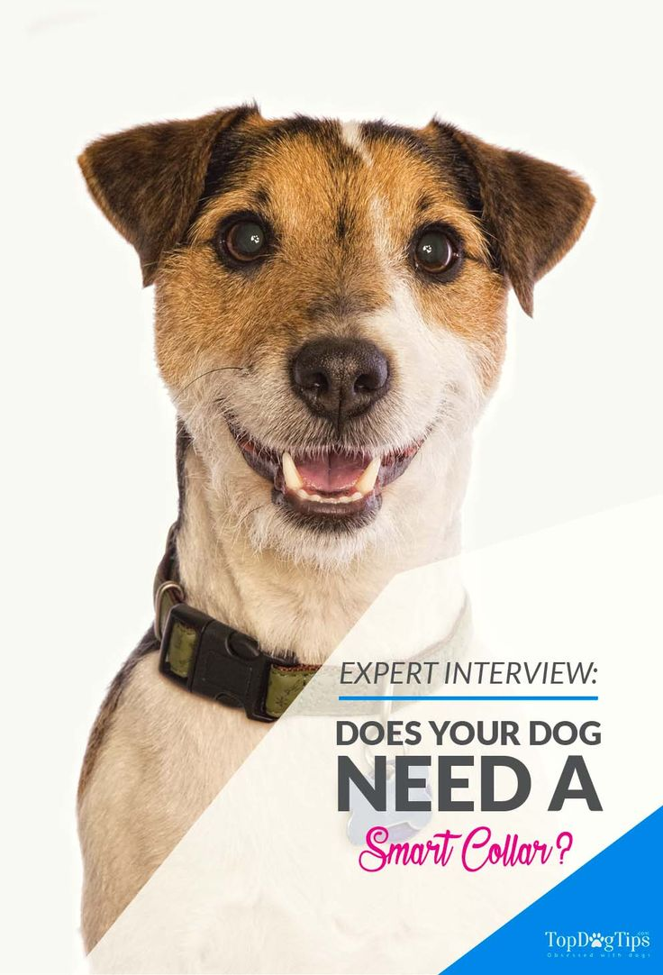 Does Your Dog Need a Smart Collar. Technology in the pet industry is advancing everyday. There are smartphone apps that help us care for our pets, new breakthroughs in veterinary medicine happening all the time, and even smart collars that allow us to keep tabs on our pet while we're not around. #dog #collars #interview #experts #dogs #collar #smart #tech #pets
