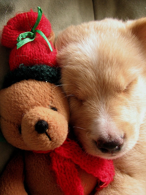 121 best images about Sleeping Animals & Babies on Pinterest