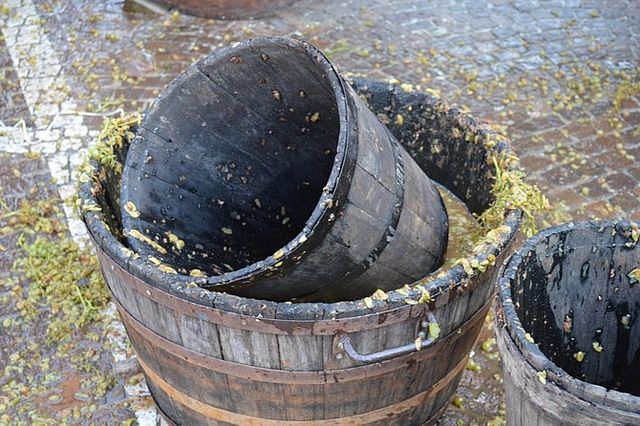 #COTIGNOLA - Sagra del vino tipico romangolo (Foto Proloco Cotignola)