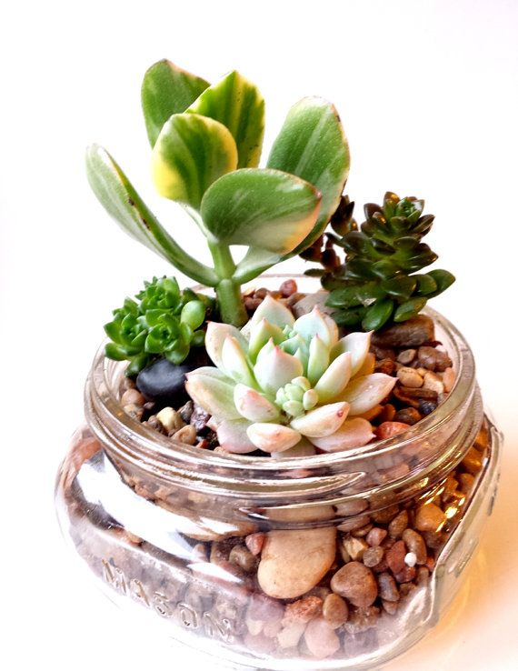 Succulents in Small Mason Jar (8 oz) We could do different colored sand and/or gravel if you wanted to put them in mason jars.