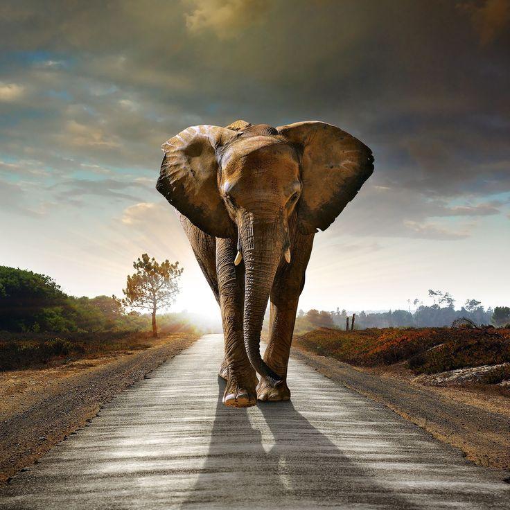Si te encantan los elefantes