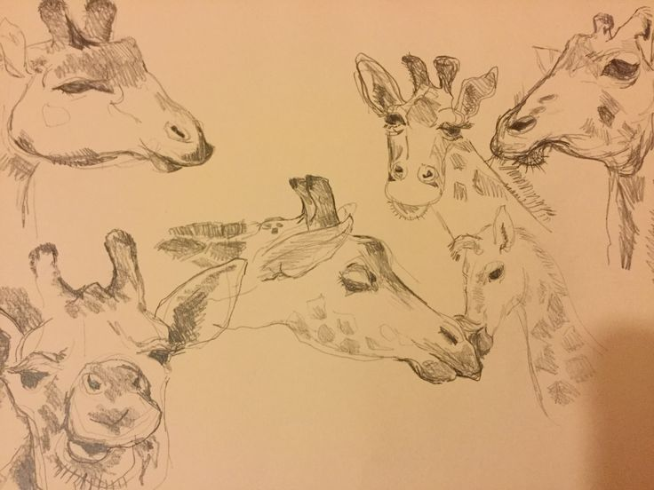 Giraffe sketches