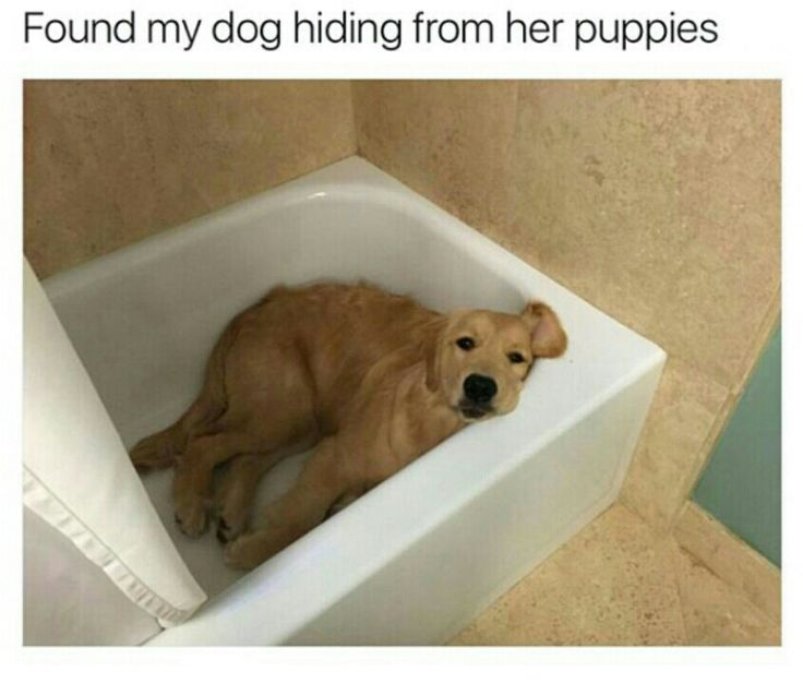 50 Hilarious Dog Tweets From 2016 Follow♔ @badgalronnie ♔