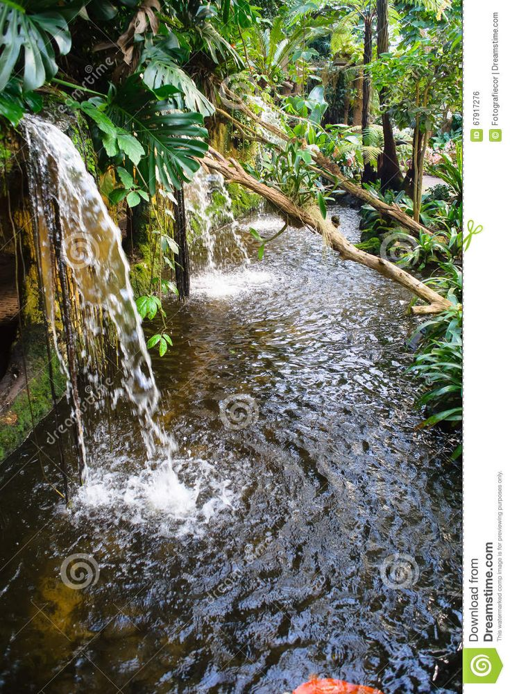 Giardino Tropicale Di Wonderfull Con Parecchie Orchidee Rare Fotografia Stock - Immagine: 67917276