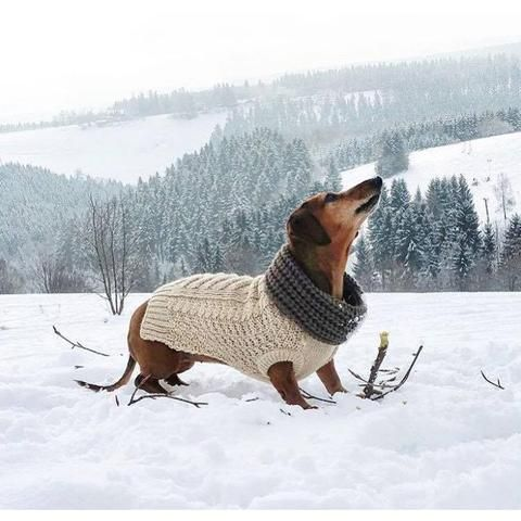 All dogs need a turtleneck! lol I love it!  fabdog - Super Chunky Soft-Knit Turtleneck - Wags for Whiskers
