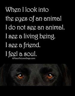 When I look into the eyes of an animal. - I do not see an animal. - I see a living being. - I see a friend. - I see a soul.