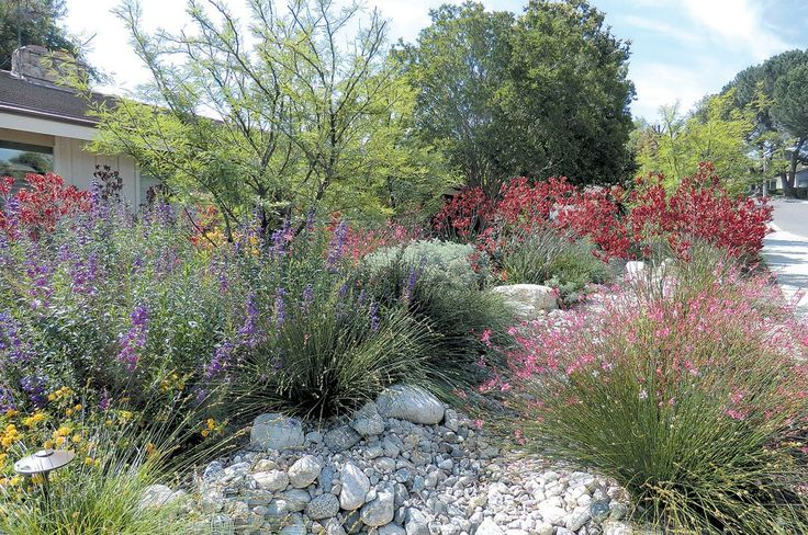 Lush, Colorful, And Water Wise: An Impossible Dream? Riverside GardenKangaroo  PawLandscaping ...