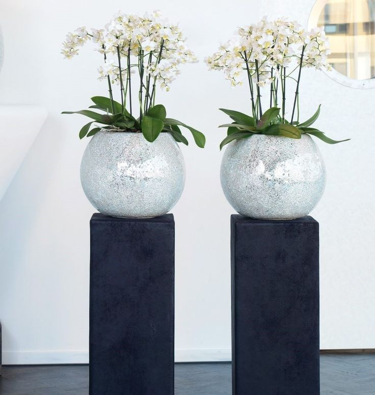 2 Office Plants in glass planters