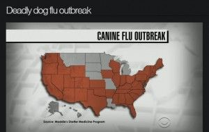 a discussion on the outbreak of a contagious dog flu in chicago area When elizabeth estes's dog, ollie, started coughing last year, she didn't think he was seriously ill at first but then the 3-year-old jack.
