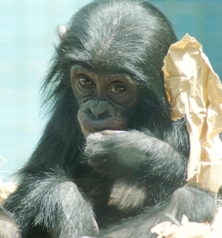 animal hypothesis