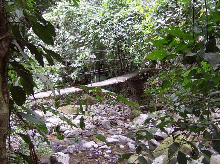 Swinging bridge over creek/Panama