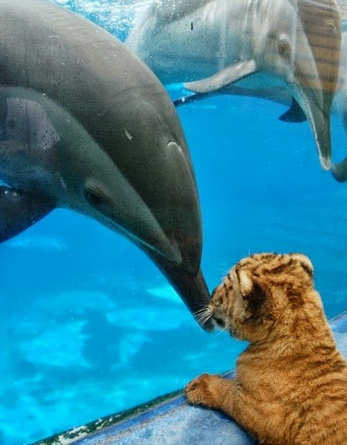 Dolphin & baby tiger