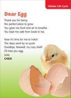 Dear Egg (Chicken Life Cycle): Science Poem