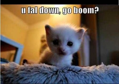 cute animals with captions | ... Awww: Cute animals + captions = win! (35 photos) » cute-captions-22